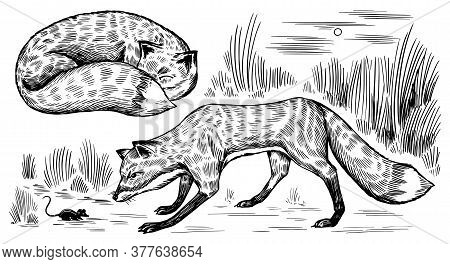 Wild Red Fox Set. Forest Ginger Animal Flying And Jumping. Vector Engraved Hand Drawn Vintage Sketch