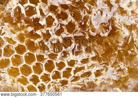Slice Of Honeycombs With Organic Honey Closeup