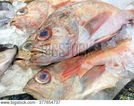 Vermillion Red Rock Fish Whole Laid Out On White Ice At Market