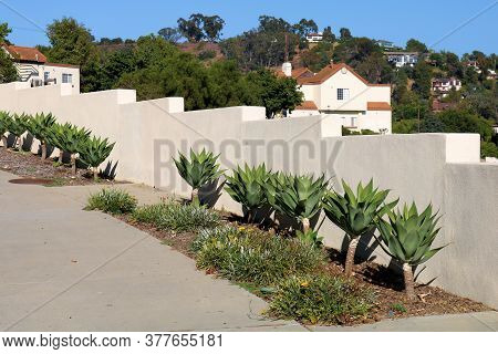 Walkway Besides Agave Plants At A Drought Tolerant Garden Overlooking Spanish Style Homes On A Hills