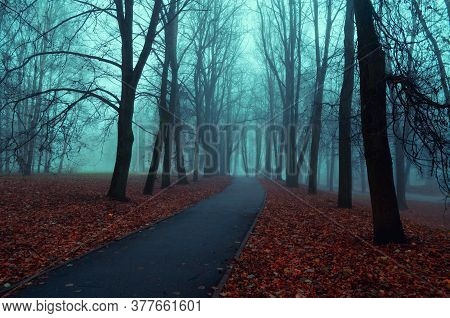 Autumn nature, misty autumn view of autumn park alley in dense autumn fog. Autumn landscape, foggy autumn view, colorful autumn park scene. Autumn background, autumn trees in the autumn park