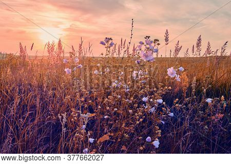 Sunrise in field. beautiful panorama rural landscape with fog, sunrise and blossoming meadow. wild f