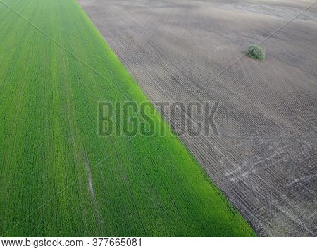 A Small Bush On Arable Field, Aerial View. Sown Agricultural Field. Background.