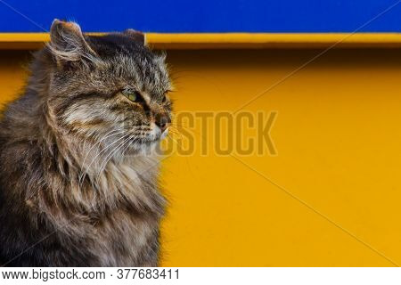 Gray Cat, Cat On A Yellow Background Close-up, Copy Space.