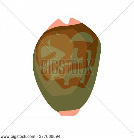Dark Green Sea Shell Illustration. Mollusc, Ocean, Decoration. Nature Concept. Illustration Can Be U