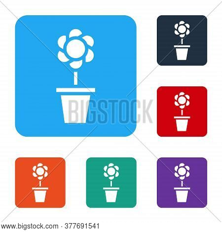 White Flower In Pot Icon Isolated On White Background. Plant Growing In A Pot. Potted Plant Sign. Se