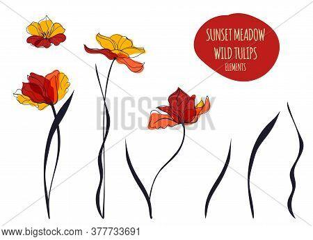 Sunset Tulips Line Art Illustration In The Scandinavian Style