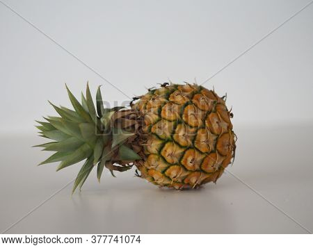 Pineapple Plant Ananas Comosus, Bromeliaceae Yellow Sweet Fruit On The Table