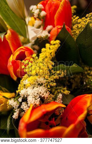 Close Up With A Colorful Vivid Mix Of Spring Flowers Of Tulips And More In Orange, Yellow, Red And W