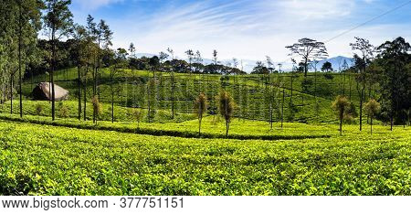 The Loolecondera Estate Was The First Tea Plantation Estate In Sri Lanka Ceylon Started In 1867 By S