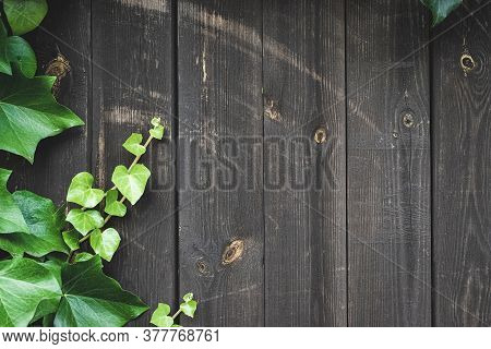 Timber Texture. Timber Plank Surface Wall For Vintage Grunge Wallpaper. Old Floor Wooden Pattern. Da