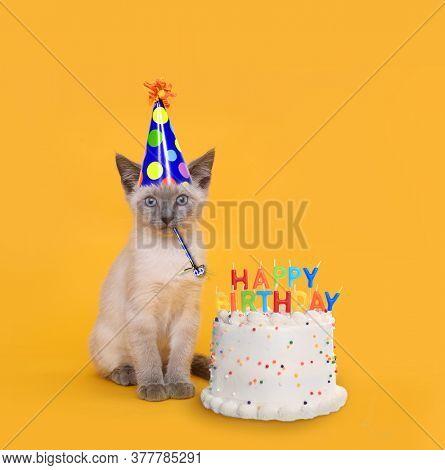 Adorable Kitten on Yellow With Birthday Cake Celebration