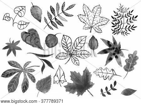 Set Of Watercolor Black Leaves. Gloomy Dark Hand-drawn Plant Leaves On White Background Isolated. Si