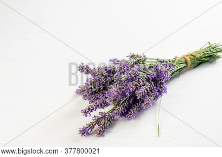 Sprigs Of Violet Lavender On The White Background Closeup.