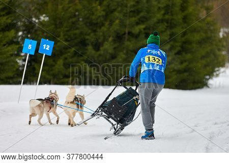 Verkhoshizhemye, Russia - 03.07.2020 - Husky Sled Dog Racing. Musher Falls Off Sled. Koltco Fortuny