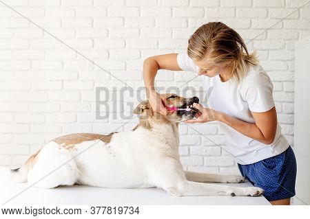 Pet Care Concept. Young Blond Woman Grooming Her Mixed Breed Dog