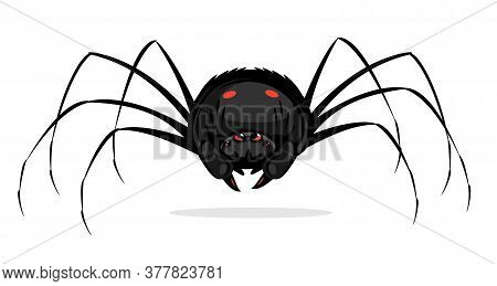 One Big Black Cartoon Scary Spider With Red Evil Eyes, Spider In Front View With Red Spots On Abdome
