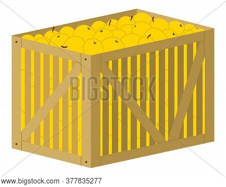 Full Container Of Apples, Picking Fruit, Yellow Ripe Product In Wooden Box. Element Of Agricultural