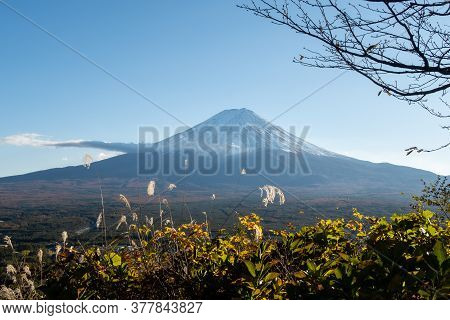 Plain View Of Mount Fuji In The Late Afternoon From Kawaguchiko Ropeway Trails In Autumn, With Green