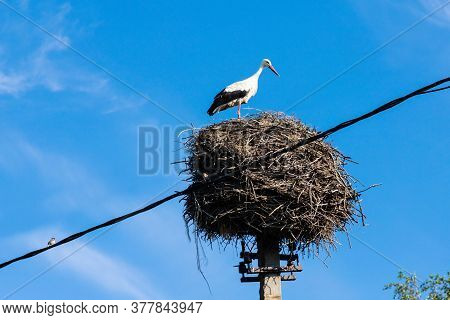 Stork In Its Nest In The Summer Months. Storks Nest.