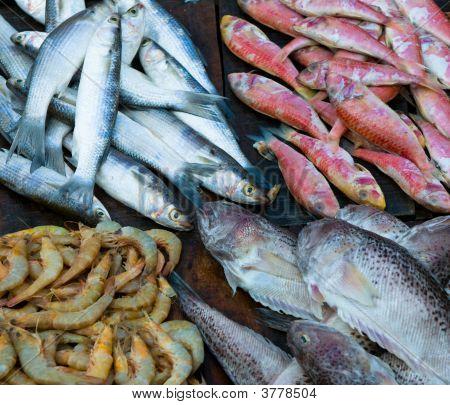 frischer Fisch auf ein Fischmarkt