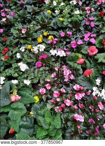 Summer Park With Beautiful Flowerbeds. Flower Bed