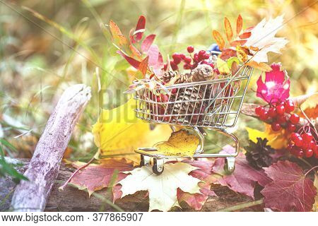 Halloween And Thanksgiving Concept, Autumn Sales. Fall Season. Maple Leaves, Berries In Supermarket