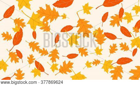 Leaf Fall. Background With Falling Leaves. Blank Or Template With Falling Autumn Leaves. Vector Illu