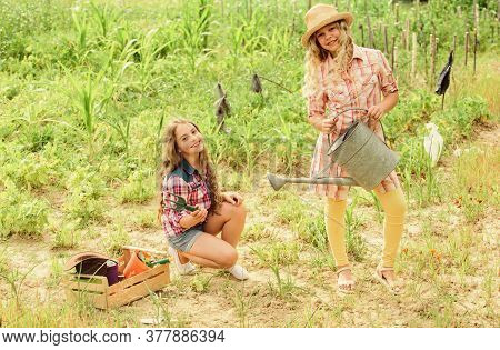 Garden And Beds. Girls Planting Plants. Agriculture Concept. Growing Vegetables. Planting Vegetables