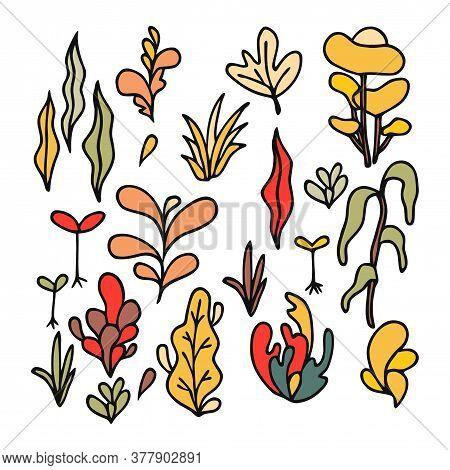 Hand Drawing Ocean Coral. Seaweeds And Sea Plant Creatures, Marine Kelp. Underwater Reef Flora, Cora
