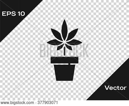 Black Medical Marijuana Or Cannabis Plant In Pot Icon Isolated On Transparent Background. Marijuana
