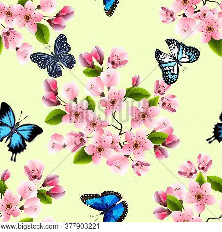 Vector Illustration With Butterflies And Sakura.butterflies And Blooming Sakura On A Colored Backgro