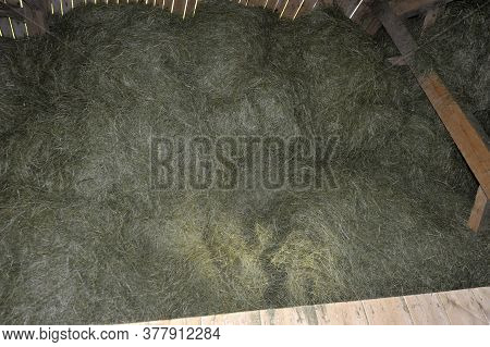 Pile Of Green Forage On The Threshing Floor Of A Farm