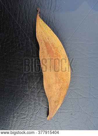 Yellow Orange Leave On Black Leathery Background On An Autumn Day