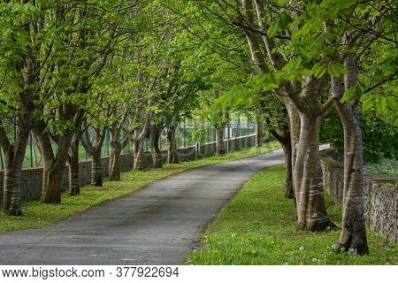 Photo Of Several Trees With Track, Green Grass And Sunlight.