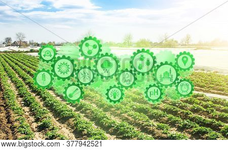 Concept Of Technological Innovation Gears On Background Field Of Plantation Of Young Potato Bushes.