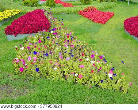 Flowerbed In City Park  At Dry Sunny Summer Day