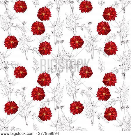 Seamless Pattern Of Flowers And Inflorescences Of Red Dahlias On A White Background
