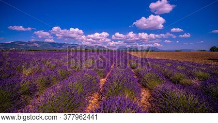 The Lavender Fields Of Valensole Provence In France - Travel Photography