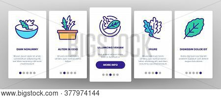 Arugula Or Rucola Onboarding Mobile App Page Screen Vector. Arugula Plant In Greenhouse And Garden,