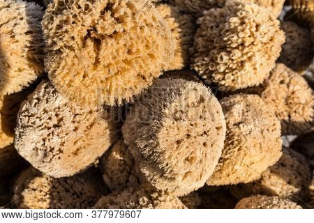 Natural Sea Sponge Greek - Baskets Of Deep Sea Natural Sea, Sponges For Sale In Crete. Mediterranean