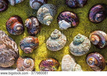 Seashell Background, Lots Of Different Seashells Piled Together For Sale In Crete. These Seashells A