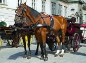 Horse-drawn Carriage in Vienna at the famous Stephansdom Cathedral poster