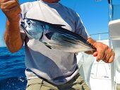 Tuna fishing for Bonita or Skipjack Tuna. poster