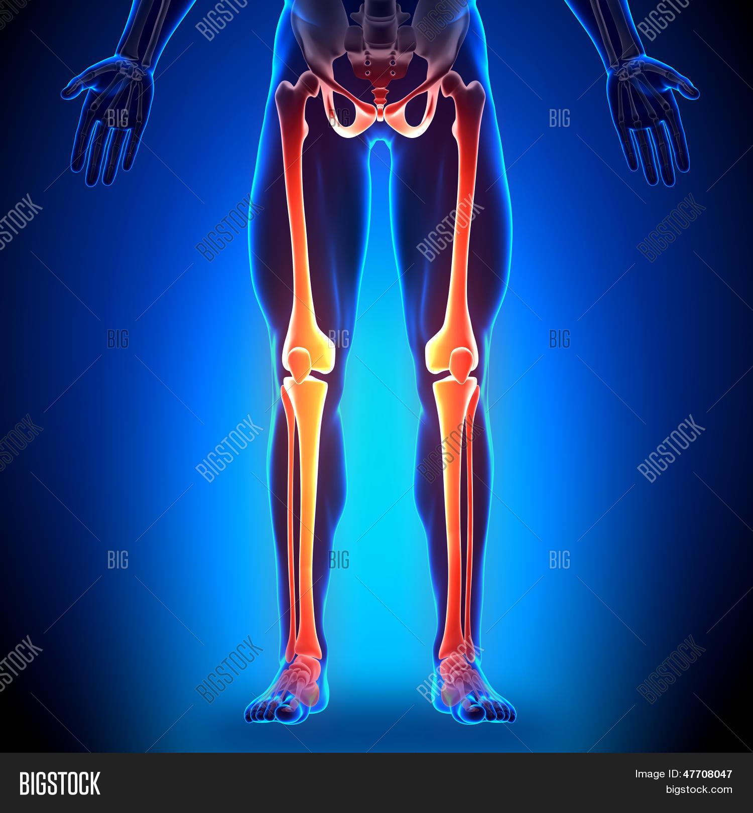 Imagen y foto Piernas - Huesos De (prueba gratis) | Bigstock