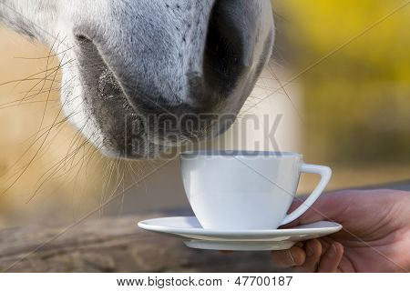 Teatime - horse is smelling a cup of coffee