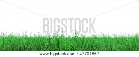 grass flooring on white