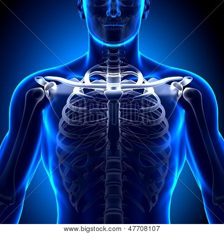 Clavícula - anatomia ossos