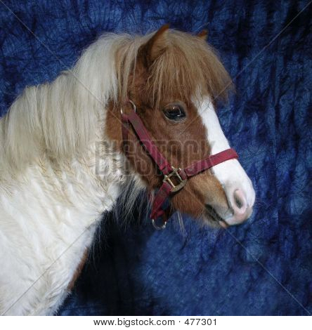 headshot of a pony on blue. poster