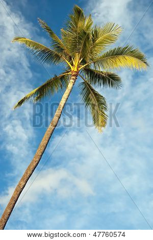 Palm Tree With Azure Blue Sky With Clouds In Background